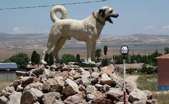 Post image for Turkish Ministry of Culture Speaks on Kangal Dogs
