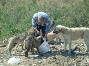 Stray Dogs in Turkey Find Homes in Europe
