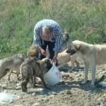 turkey stray dogs